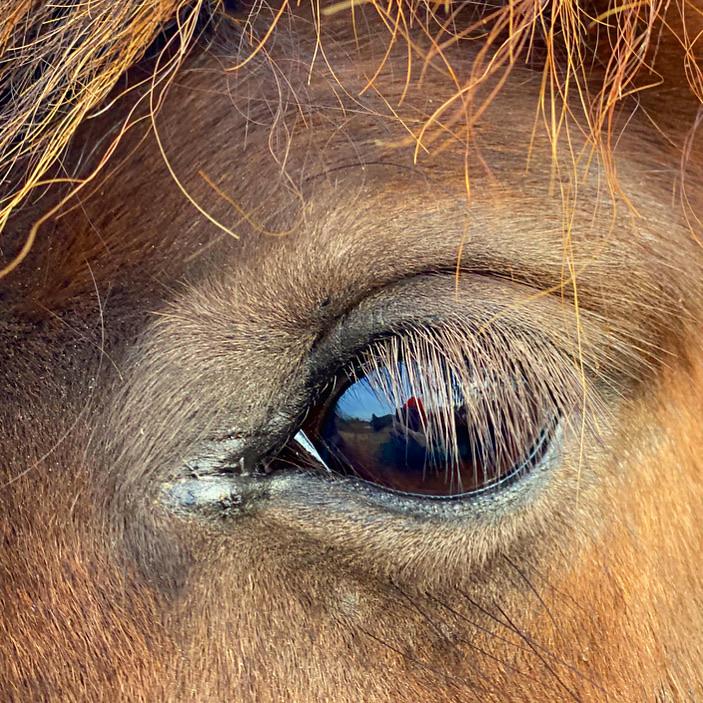 Skøn hest