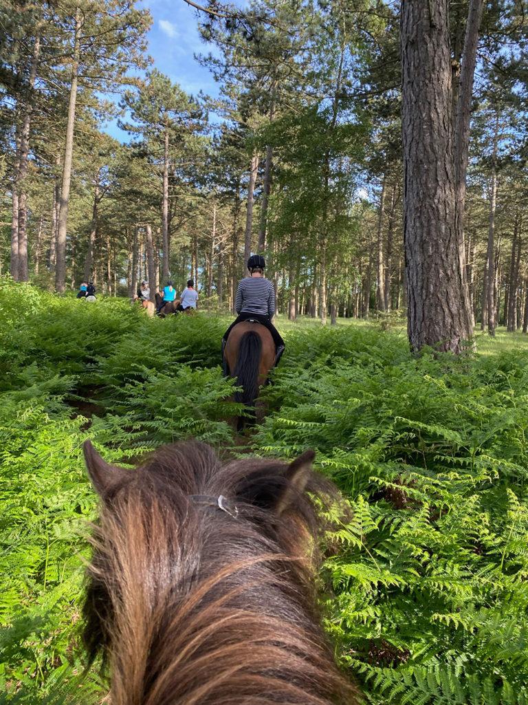 Ridning i skoven